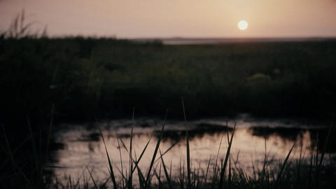 Evening sunset at the small lake with green grass on the shore Footage
