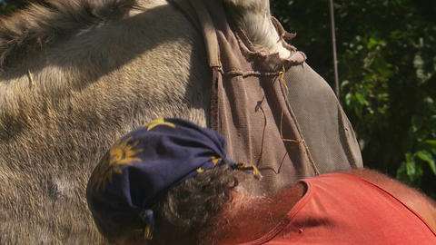 Man Removes Fly Screen From Donkey stock footage