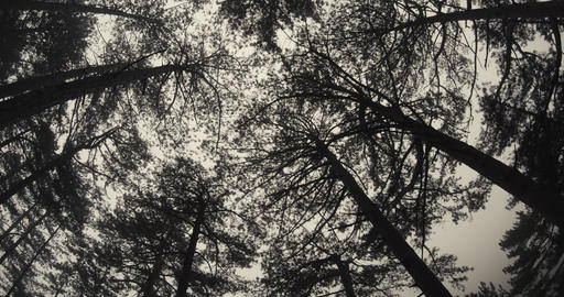 view from the bottom up at the sky from the earth through the branches and trunk Footage