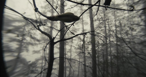 through the branches of a tree close up spring forest visible in the fog Footage