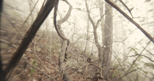 through the spider web on the branch of a tree misty spring forest seen close up Footage