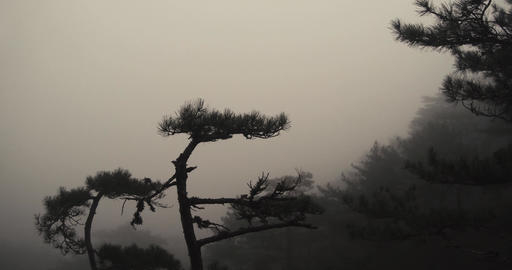 mist-shrouded mountain slopes all around and a pine tree on the cliff Footage
