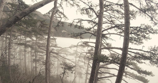 View from the middle of a hill overgrown with pine trees in the mist of the moun Footage