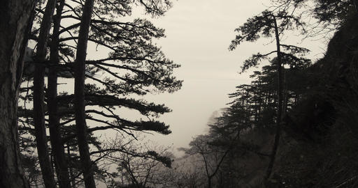 view from the middle of the hills are covered in mist and the forest Footage