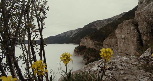 Yellow flowers on the edge of cliffs washed by the sea like a mist Footage