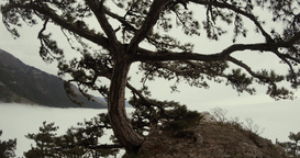 coniferous tree on a hill in the mountains at the bottom of the sea cloudy Footage