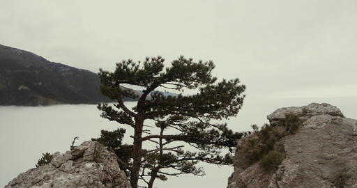 pine tree on a cliff surrounded by misty mountains Footage