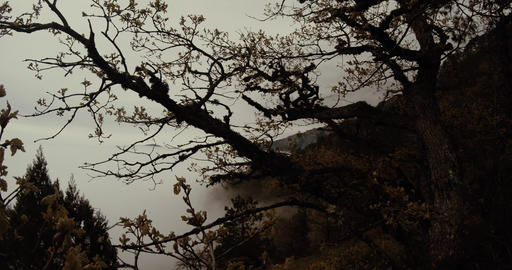 misty mountain landscape, a tree in the foreground Footage