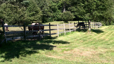 Horses graze behind fence in shade of trees on hot summer day Footage