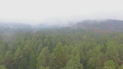AERIAL: Flying over misty autumn forest Footage