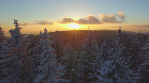 AERIAL: Flying Over Frozen Forest In Winter At Sunset stock footage