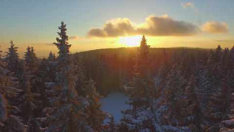 AERIAL: Flying over winter forest at sunrise Footage