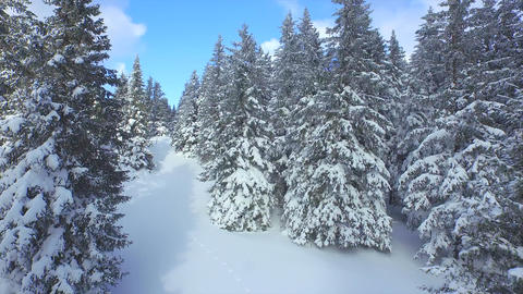 AERIAL: Following the footsteps in snow through winter forest Footage