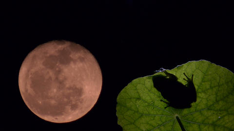 timelapse with frog and moon Footage