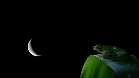 timelapse with frog on leaf Footage