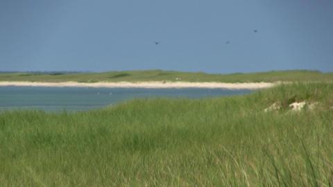 A Distant Shot Of Beach Coastline Over Grasslands Of South Monomoy Island Cape C stock footage