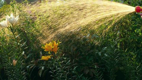 Manual garden sprayer Footage