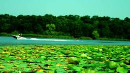 Water Ski On The Lake Footage