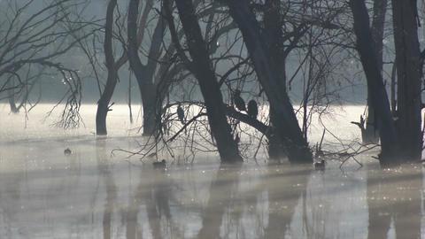 cormorants and ducks in the lagoon Footage