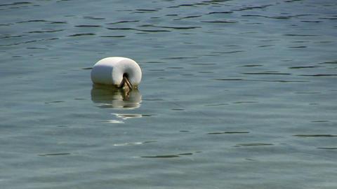 Single white buoy Footage