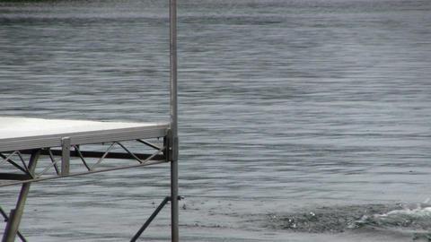 Golden retriever dives after tennis ball; 4 Footage