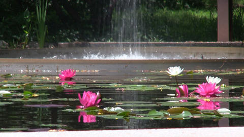 Flume fountain waterfall lands in oval pool of lotus flowers at Heritage Museums Footage