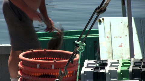 Time-lapse of fisherman unloading flounder from storage bins at Menemsha fishing Footage