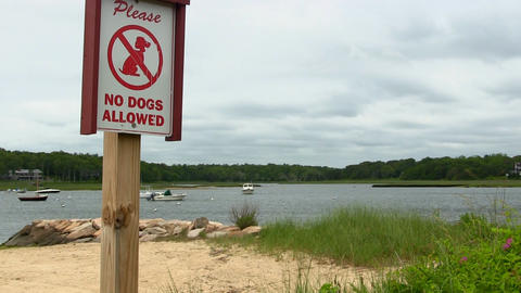 No dogs on beach sign Footage