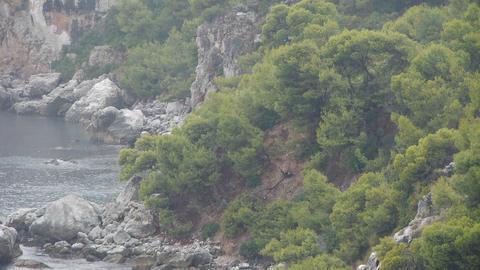 rain in the Mediterranean forest Footage