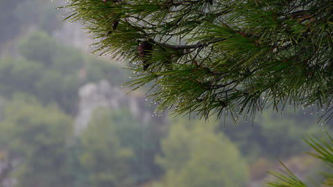 Rain In The Forest Interior stock footage