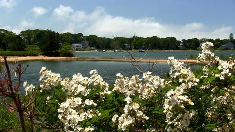 White flowers & sandbar Cape Cod Footage