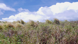 Grassy pasture in Hawaii Footage