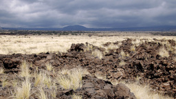Lava field desert with dry grass Footage