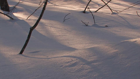 Winter Forest in Towada Lake,Aomori,Japan Stock Video Footage