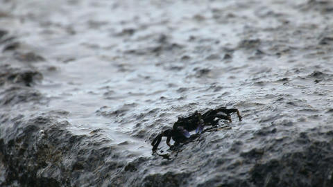 Crab Stock Video Footage