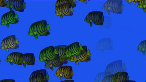 school of fish underwater at night Animation