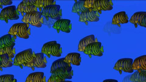 school of fish underwater at night Stock Video Footage