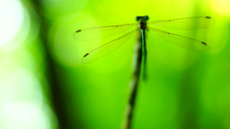 Silhouette of dragonfly resting on a branch Footage