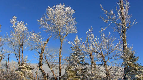 Snow covered trees against blue sky Footage