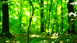 Trees in forest with bright afternoon sun and rays and sound Footage