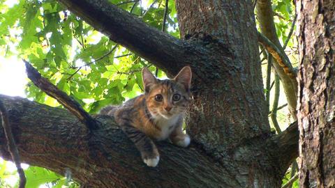 Kitten plans great tree escape; part 2 Live Action
