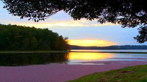 Golden sunset over cranberry bog; 4 Footage