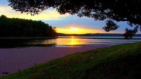 Golden sunset over cranberry bog; 6 Footage