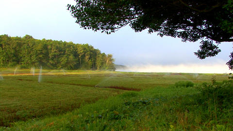 Watering Cranberry Bog; 1 stock footage