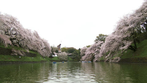 POV of ship Sakura(Cherry) blossoms are falling pond at Chidorigafuchi park in T Footage