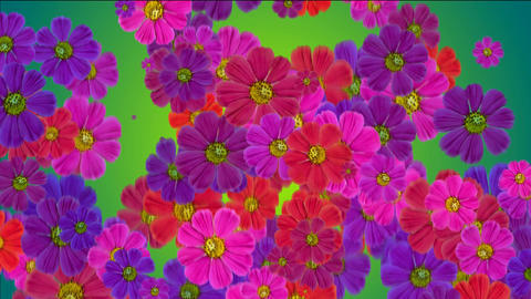Animation Of Falling Flowers stock footage