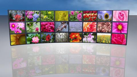 Multi screen beautiful flowers Footage