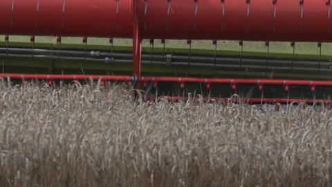 Detail of a combine harvester harvesting wheat Footage