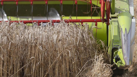Slow motion of a combine harvester harvesting wheat Footage