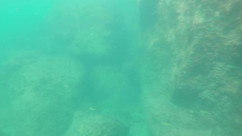 Fish under water Footage